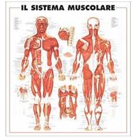 Poster scientifici